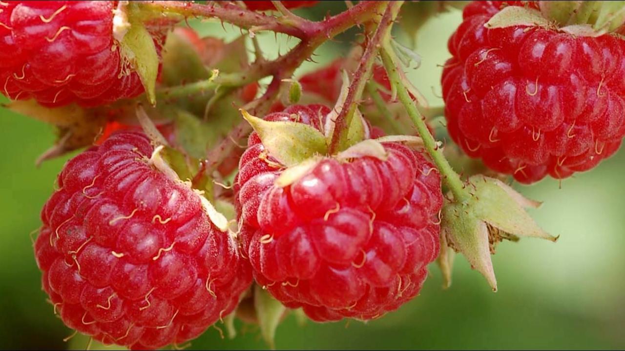 10 loại rau củ là khắc tinh của tế bào ung thư cổ tử cung-2