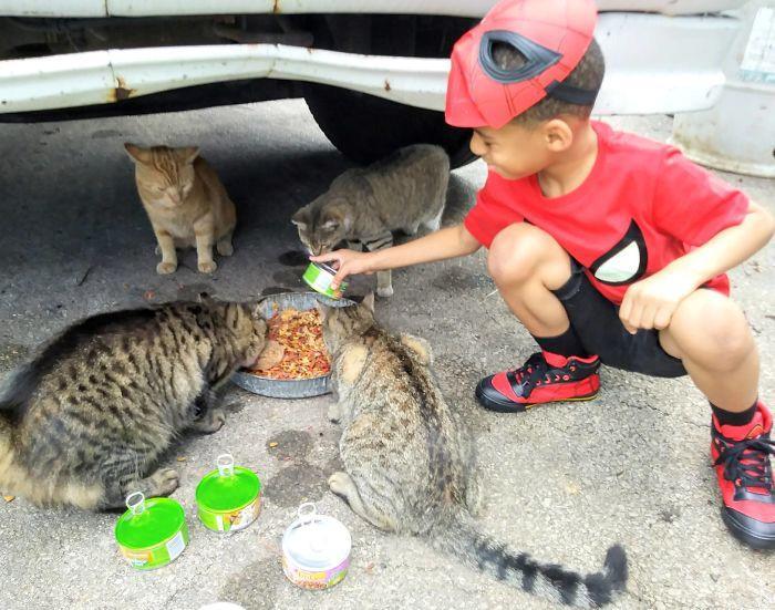 Cậu bé 5 tuổi có khả năng chăm sóc, chơi đùa cùng mèo hoang-8