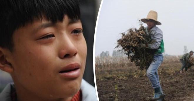 Cảm động cậu bé 12 tuổi bỏ học đi dỡ lạc thuê kiếm tiền chữa bệnh cho mẹ-1