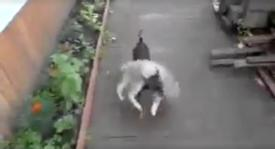 She Tells Her Dog To Bring The Cat Home, But Keep Watching Till The End… I CAN'T Stop Laughing!!