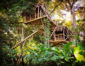 Cặp vợ chồng làm nhà lơ lửng trên cây giữa rừng