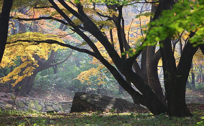 Những địa điểm lý tưởng để ngắm mùa thu ở Hàn Quốc-3