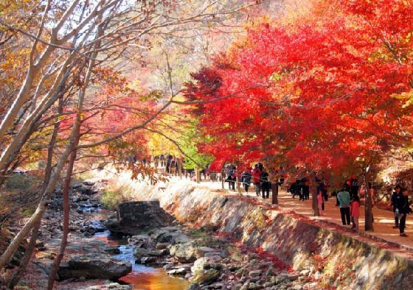 Những địa điểm lý tưởng để ngắm mùa thu ở Hàn Quốc-4