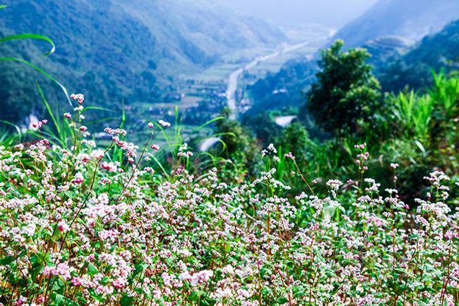 Vi vu Hà Giang ngắm hoa tam giác mạch nở đẹp ngất ngây-6
