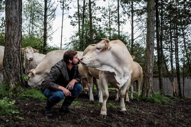 3 loại thịt bò đắt hơn vàng, siêu quý hiếm mà ai cũng muốn nếm thử một lần-2