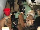 20 chú chó được cứu trong bão vẫn đang xoay xở kiếm thức ăn