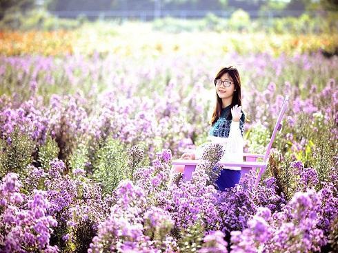 Mê mẩn thảo nguyên hoa bạt ngàn giữa lòng Hà Nội