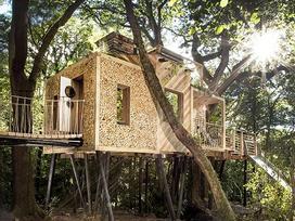 Ngôi nhà trên cây sang trọng ở Anh