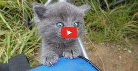Kitten Scampers Up to Man Meowing for Love While He is Fishing