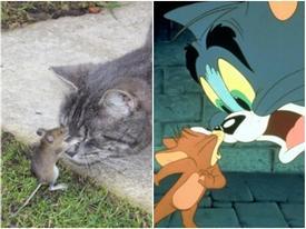 Tom và Jerry phiên bản đời thật vẫn hài như phim