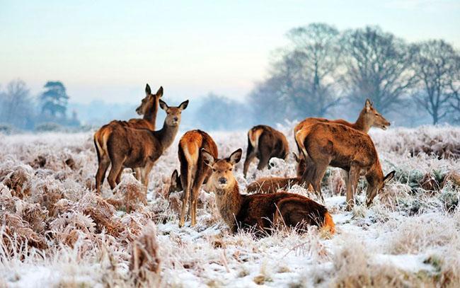 Những địa điểm du lịch đẹp lung linh khi vào mùa đông-7