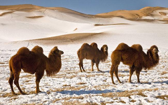 Những địa điểm du lịch đẹp lung linh khi vào mùa đông-8