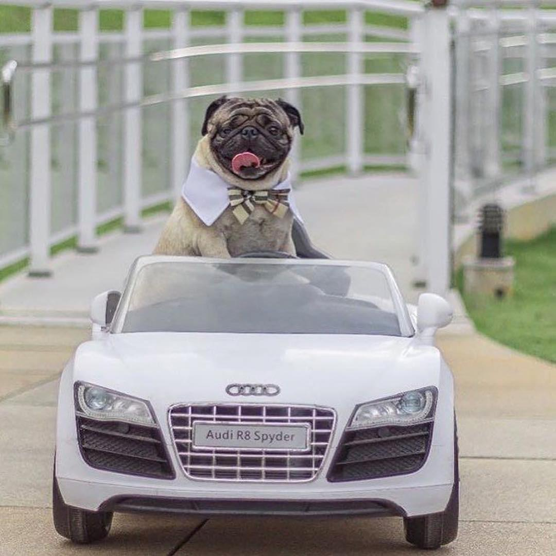 Hâm mộ cuộc sống sang chảnh của 11 chú chó đại gia ăn chơi không sợ mưa rơi-7