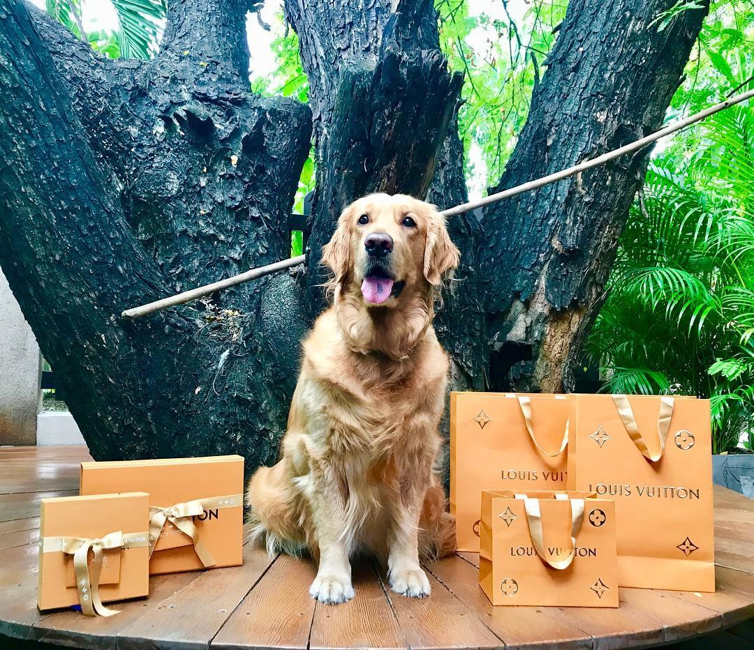 Hâm mộ cuộc sống sang chảnh của 11 chú chó đại gia ăn chơi không sợ mưa rơi-8