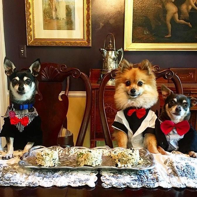 Hâm mộ cuộc sống sang chảnh của 11 chú chó đại gia ăn chơi không sợ mưa rơi-9