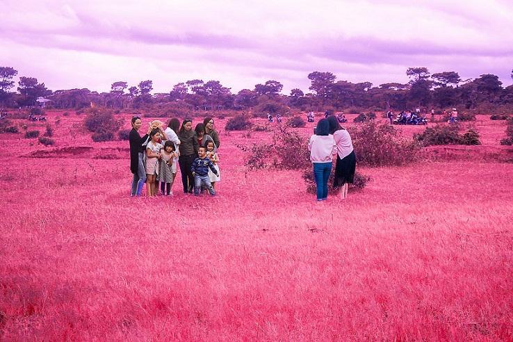 Đồi cỏ hồng ở Gia Lai đẹp như tranh vẽ hút khách đầu đông-6