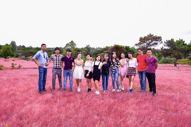 Đồi cỏ hồng ở Gia Lai đẹp như tranh vẽ hút khách đầu đông-10