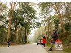 Ngắm rừng săng lẻ nguyên sinh đẹp như tranh giữa đại ngàn xứ Nghệ