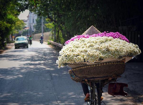 Những địa điểm chụp ảnh cúc hoạ mi đẹp tinh khôi không thể bỏ lỡ ở Hà Nội-6