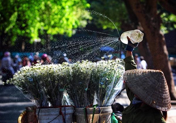 Những địa điểm chụp ảnh cúc hoạ mi đẹp tinh khôi không thể bỏ lỡ ở Hà Nội-8