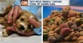 Popular Dog Food Brand Has Poisoned & Killed Thousands Of Dogs!
