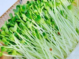 10 điều kỳ diệu xảy ra khi bạn ăn rau mầm hằng ngày