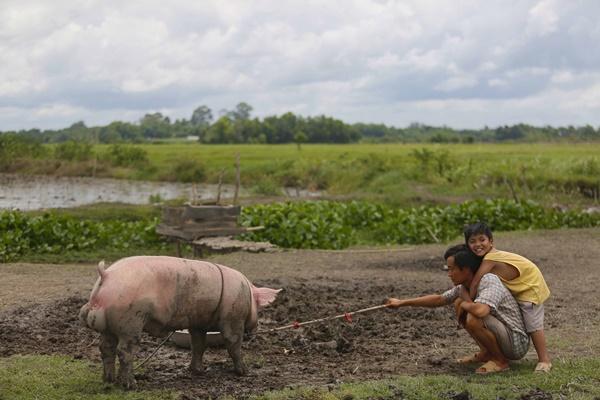 Lương Mạnh Hải: từ hotboy nổi loạn đến soái ca chăn lợn-6