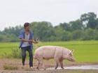 Lương Mạnh Hải: từ 'hotboy nổi loạn' đến 'soái ca chăn lợn'
