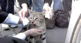 CAT DESPERATELY MEOWING HELP, BUT THEN PEDESTRIANS RUSH TOWARDS HIM AFTER THEY NOTICE HE'S UNDER IT?!