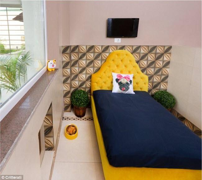 Bên trong khách sạn sang trọng, lộng lẫy cho chó đầu tiên ở Ấn Độ-2