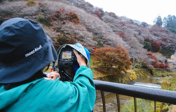 Hoa anh đào trái mùa ở ngôi làng Nhật Bản-4