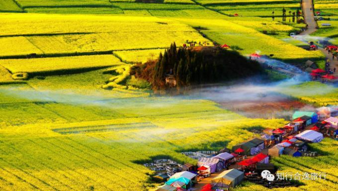 Biển hoa cải vàng ngút tầm mắt ở Trung Quốc-2