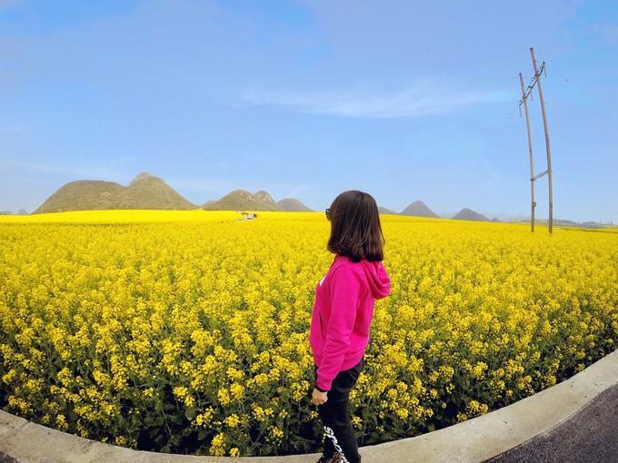 Biển hoa cải vàng ngút tầm mắt ở Trung Quốc-5