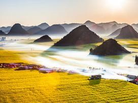 'Biển' hoa cải vàng ngút tầm mắt ở Trung Quốc