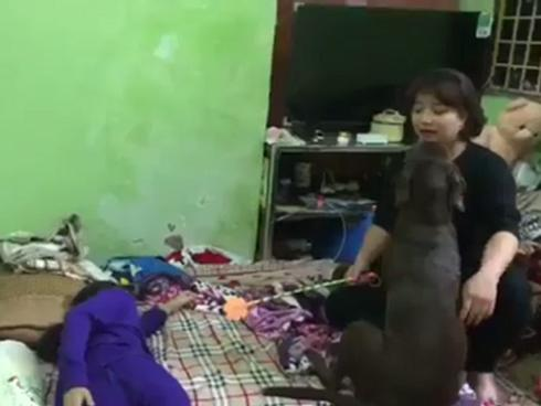 Chú chó đáng yêu giúp cô chủ nhỏ không bị đánh đòn gây bão mạng