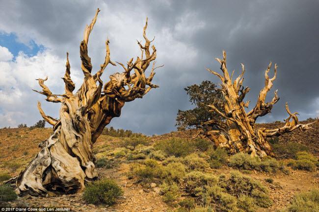 Ngỡ ngàng trước những cây cổ thụ kỳ dị nhất hành tinh-1