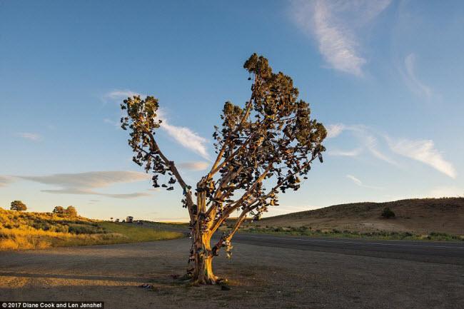 Ngỡ ngàng trước những cây cổ thụ kỳ dị nhất hành tinh-4