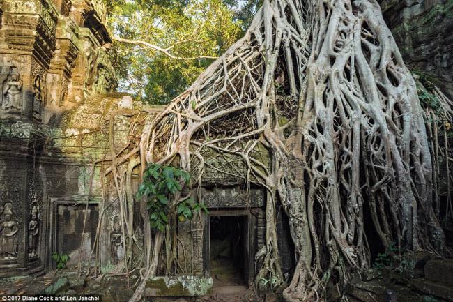Ngỡ ngàng trước những cây cổ thụ kỳ dị nhất hành tinh-5