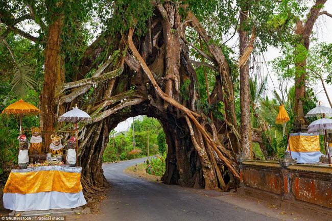 Ngỡ ngàng trước những cây cổ thụ kỳ dị nhất hành tinh-6