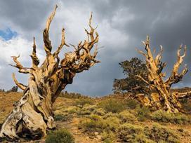 Ngỡ ngàng trước những cây cổ thụ kỳ dị nhất hành tinh