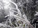 Dự báo thời tiết 15/12: Miền Bắc rét buốt, xuất hiện băng giá-2