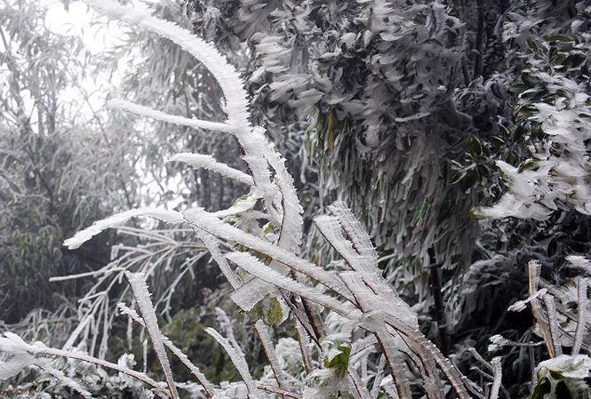 Đêm mai 15/12 miền Bắc có nơi rét buốt 1 độ C, Mẫu Sơn có thể xuất hiện băng giá-1