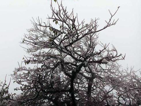 Dự báo thời tiết 16/12: Rét nhất đầu mùa, Sa Pa xuống -1 độ