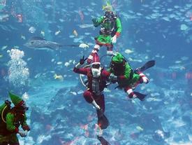4 điểm đón Giáng sinh ở Singapore cho kỳ nghỉ cuối năm