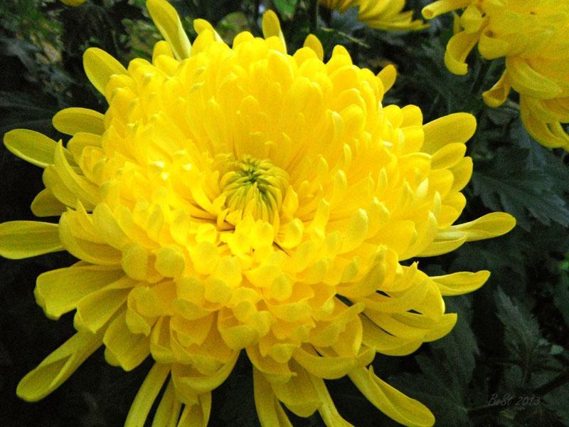 Hoa nào nên chọn cắm trên bàn Thờ để rước lộc vào nhà đặc biệt là trong năm mới?-1