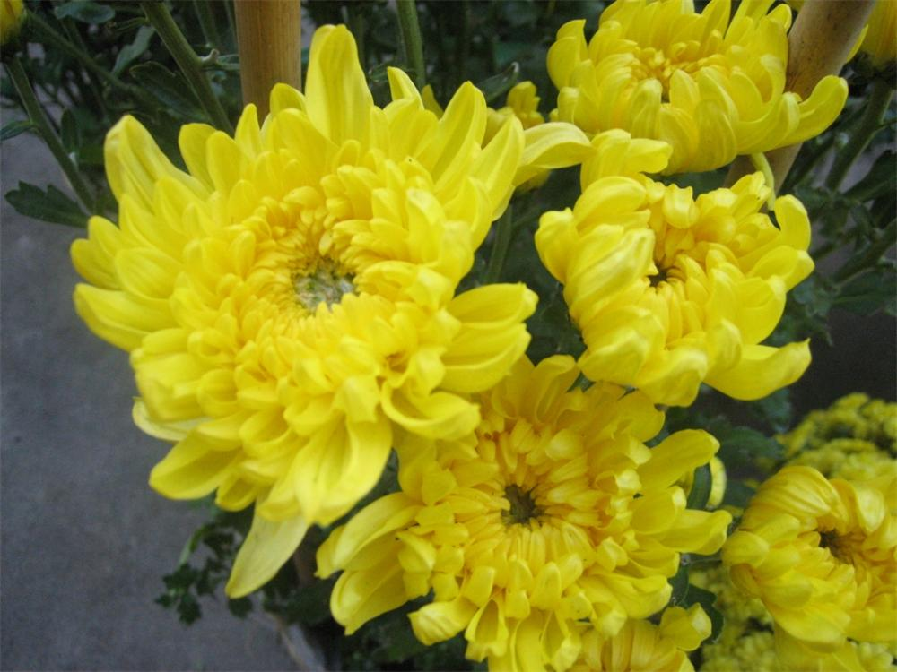 Hoa nào nên chọn cắm trên bàn Thờ để rước lộc vào nhà đặc biệt là trong năm mới?-2