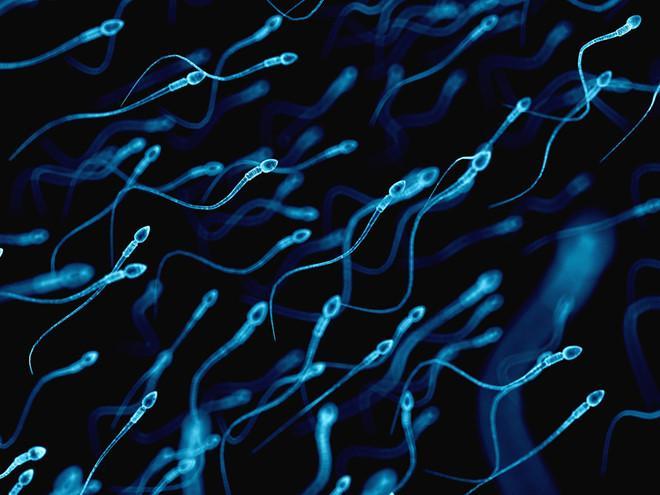 Nghiên cứu dùng tinh trùng chữa bệnh ung thư-1