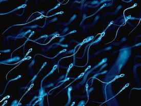 Nghiên cứu dùng tinh trùng chữa bệnh ung thư