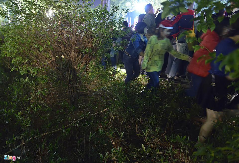 Trèo cây, giẫm đạp bồn hoa xem ca nhạc đêm Noel-4