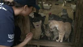 POOR CATS CRYING OUT FOR HELP, TRAPPED IN TRAILER TRYING TO SURVIVE – NOW WATCH WHEN THEY'RE FREED